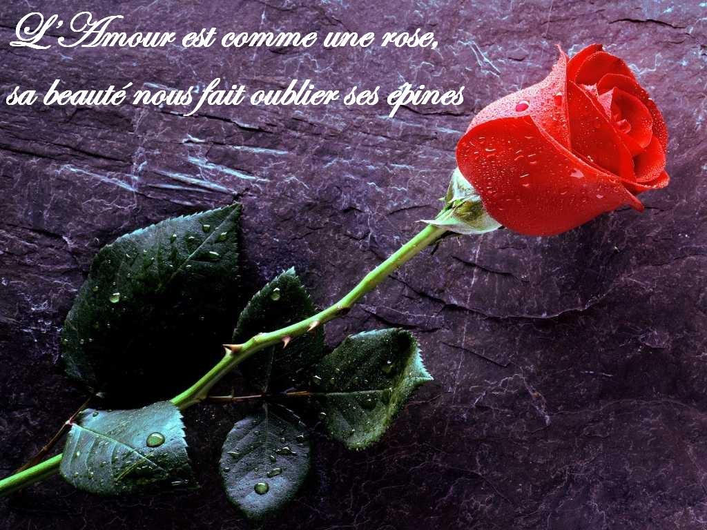 L_amour